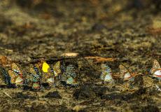 Butterflies in Namibia