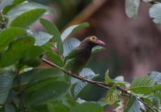 Bird quiz…