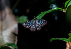 Sri Lankan butterflies and caterpillars