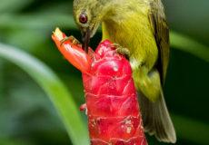 Birds in Singapore botanical gardens