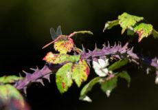 Minsmere tiny creatures