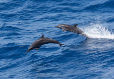 Dolphins coming