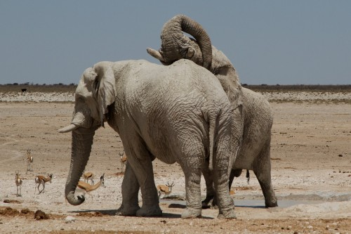 elephant (6)