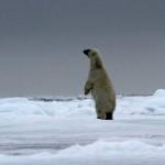 Polar Bear (54)