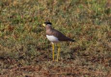 Wetland birds of Sri Lanka