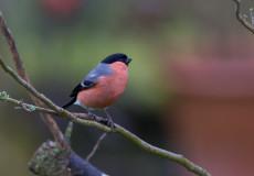 My own 'big garden birdwatch'