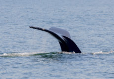 Sea-life in Monterey Bay