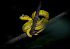 Costa Rica nightlife