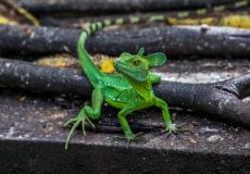 Crocs, caimans and lizards