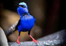 Pretty spectacular birds – Sarapiqui