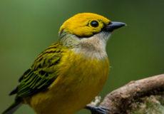 Pretty spectacular birds – Bosque de Paz