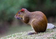 Bosque de Paz mammals