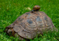 The tortoise and the snail