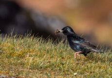 Smaller birds in Scotland